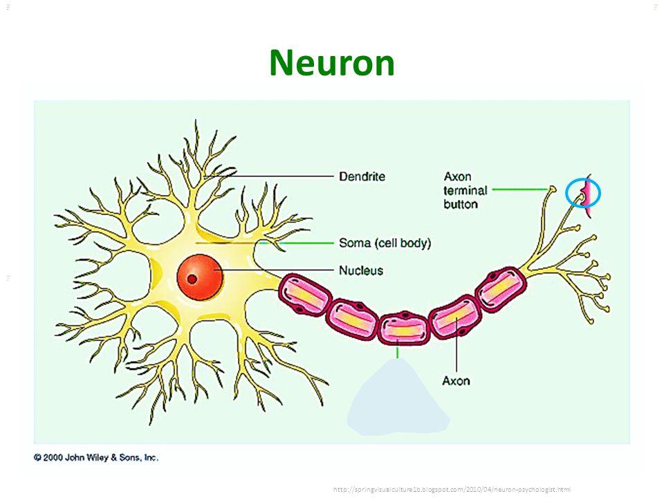 Neuron http://springvisualculture1b.blogspot.com/2010/04/neuron-psychologist.html