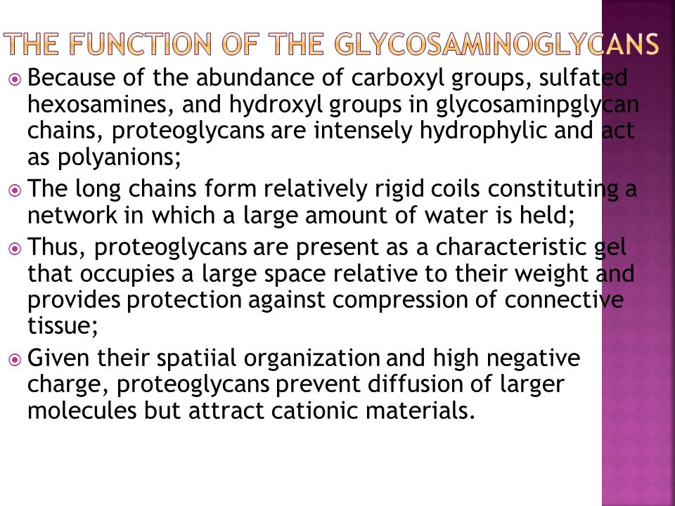 The function of the Glycosaminoglycans