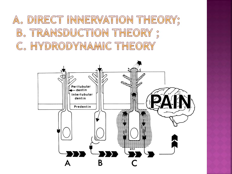 A. Direct innervation theory; B. Transduction theory ; C