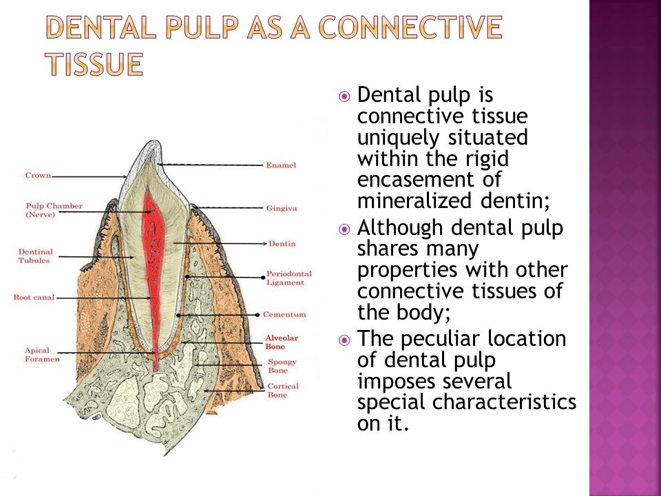 Dental Pulp as a connective tissue