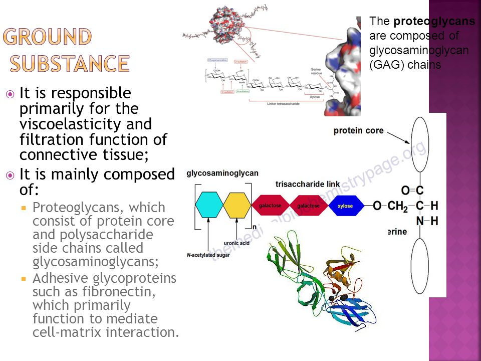 The proteoglycans are composed of glycosaminoglycan (GAG) chains