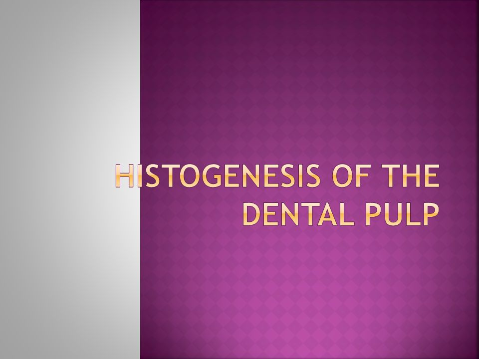 Histogenesis of the dental pulp