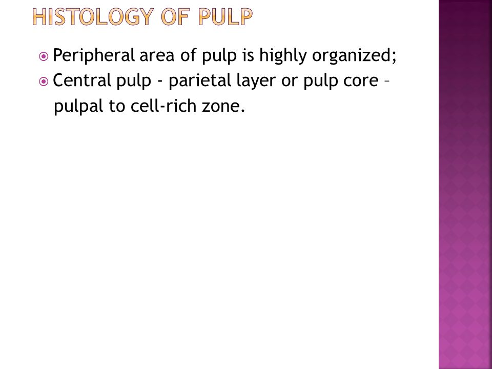 Histology of Pulp Peripheral area of pulp is highly organized;