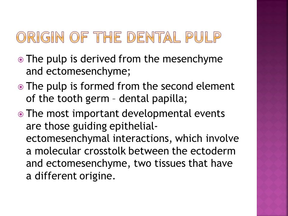 Origin of the dental pulp