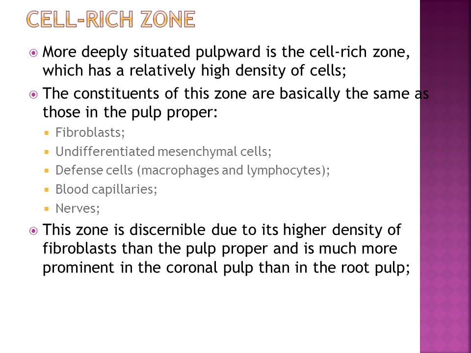 Cell-rich zone More deeply situated pulpward is the cell-rich zone, which has a relatively high density of cells;