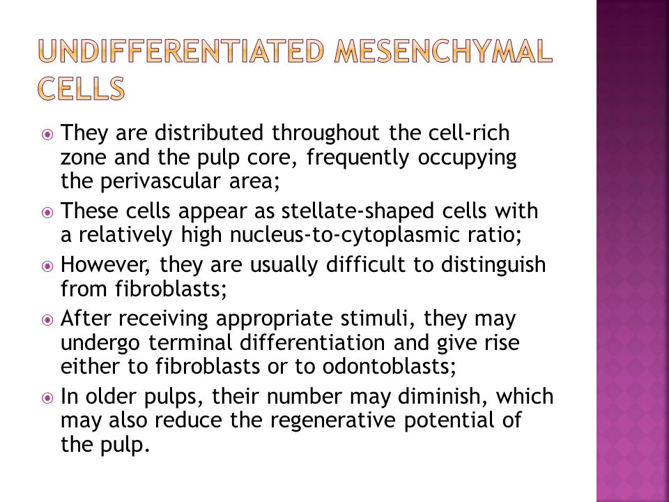 Undifferentiated mesenchymal cells