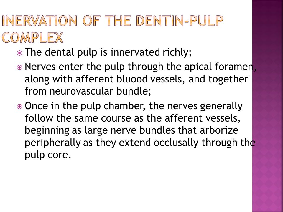 Inervation of the Dentin-Pulp Complex