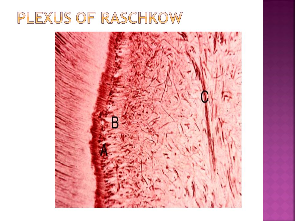 Plexus of Raschkow