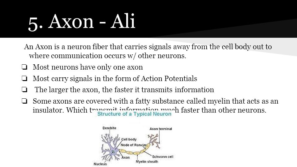 5. Axon - Ali An Axon is a neuron fiber that carries signals away from the cell body out to where communication occurs w/ other neurons.