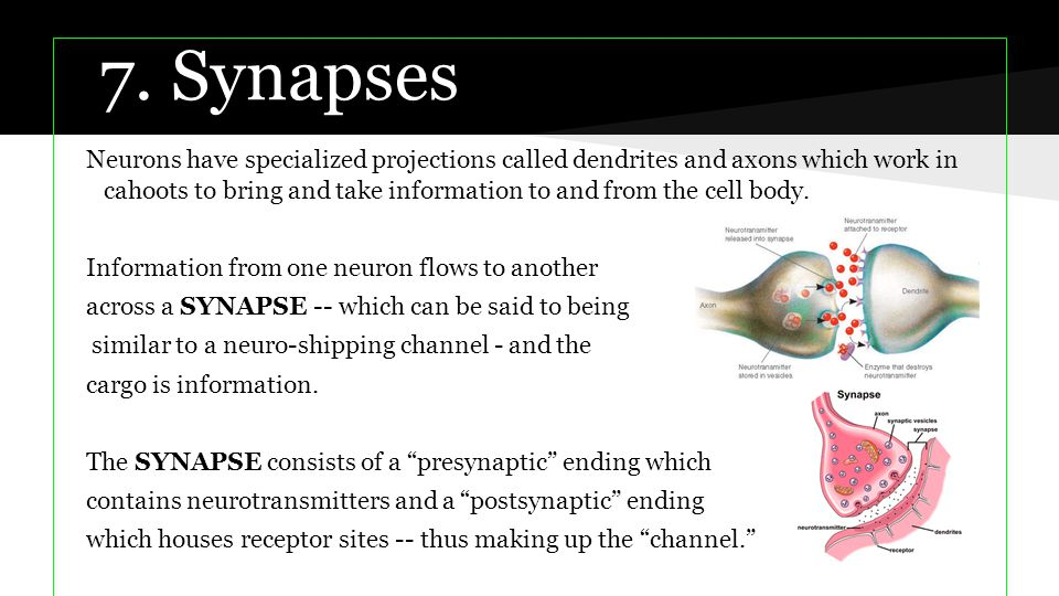 7. Synapses