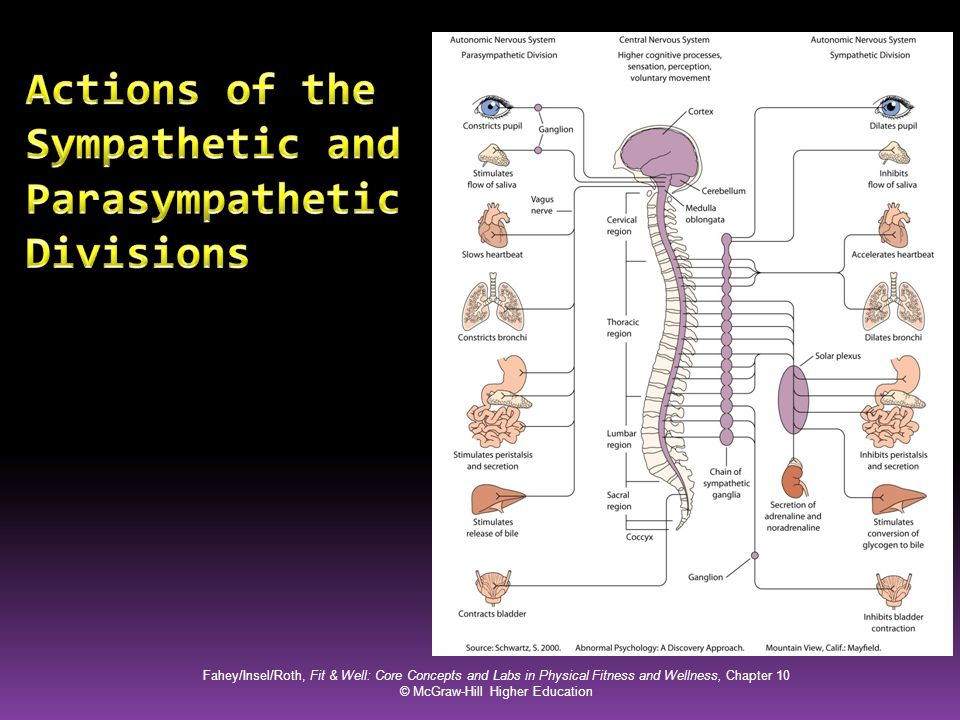 Actions of the Sympathetic and Parasympathetic Divisions