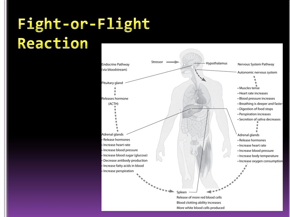 Fight-or-Flight Reaction