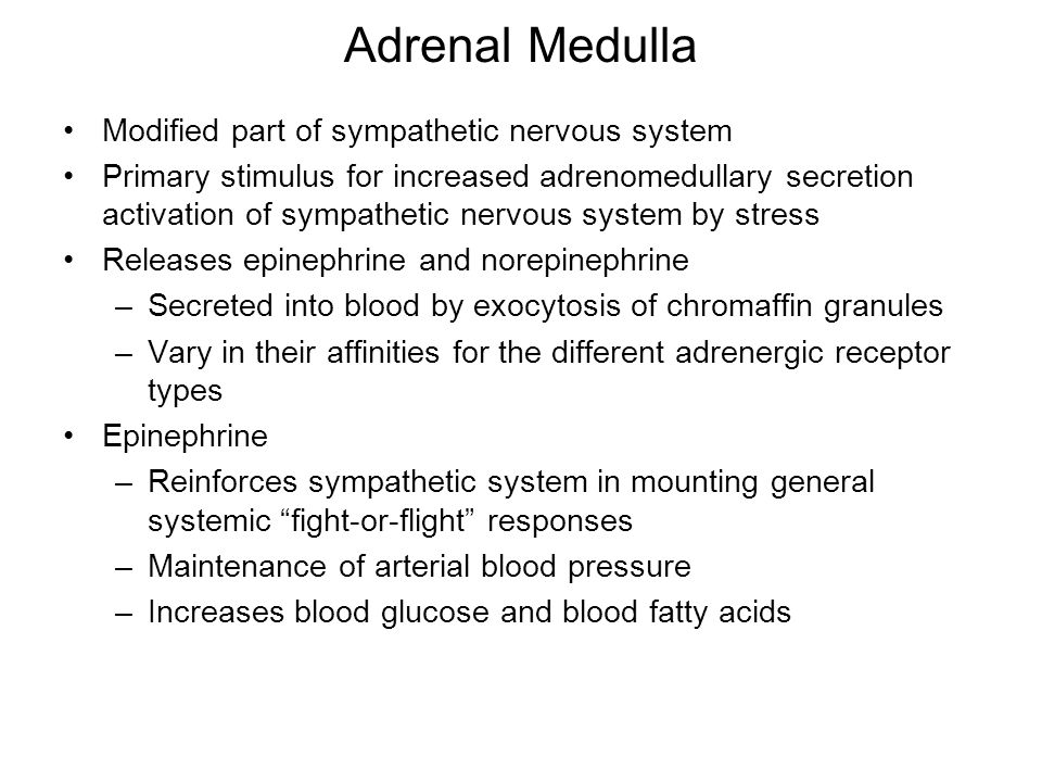 Adrenal Medulla Modified part of sympathetic nervous system