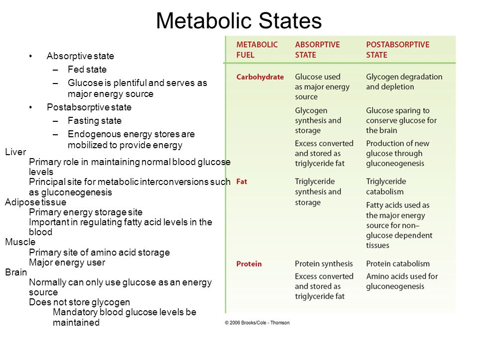 Metabolic States Absorptive state Fed state