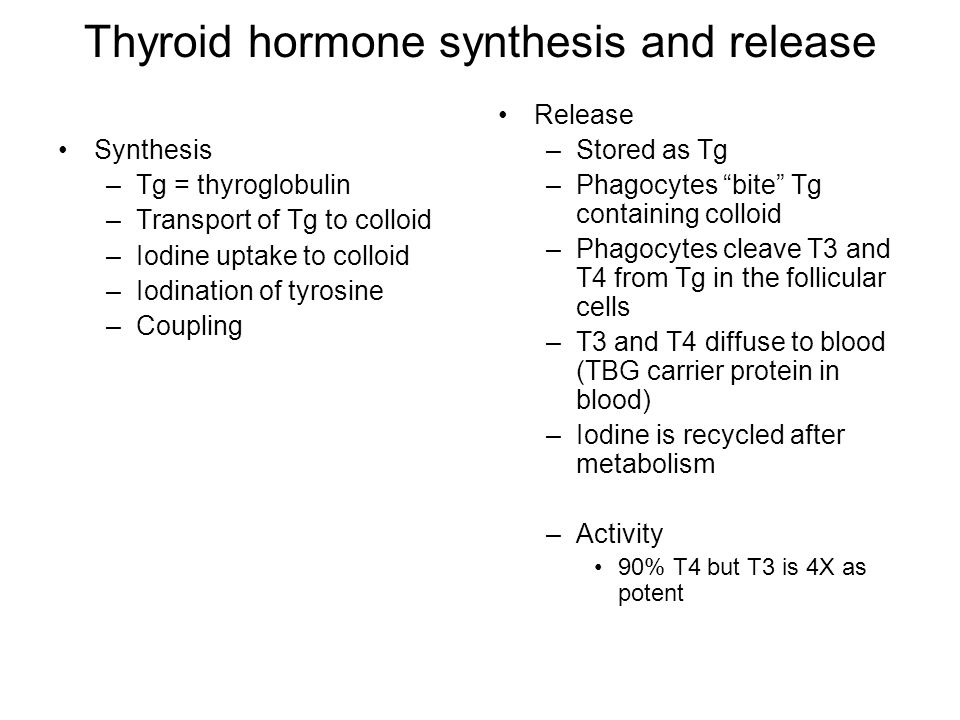 Thyroid hormone synthesis and release