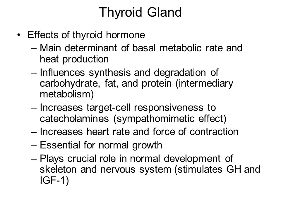 Thyroid Gland Effects of thyroid hormone
