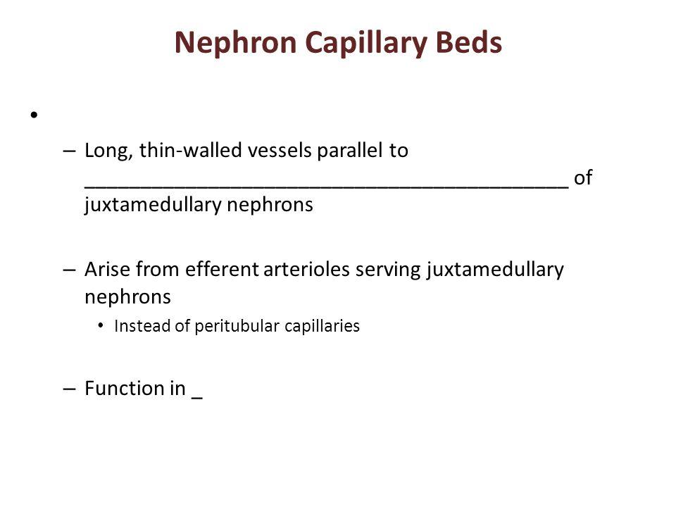 Nephron Capillary Beds