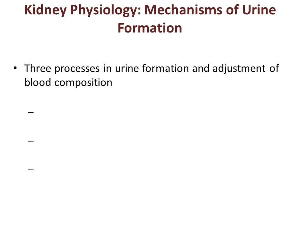 Kidney Physiology: Mechanisms of Urine Formation
