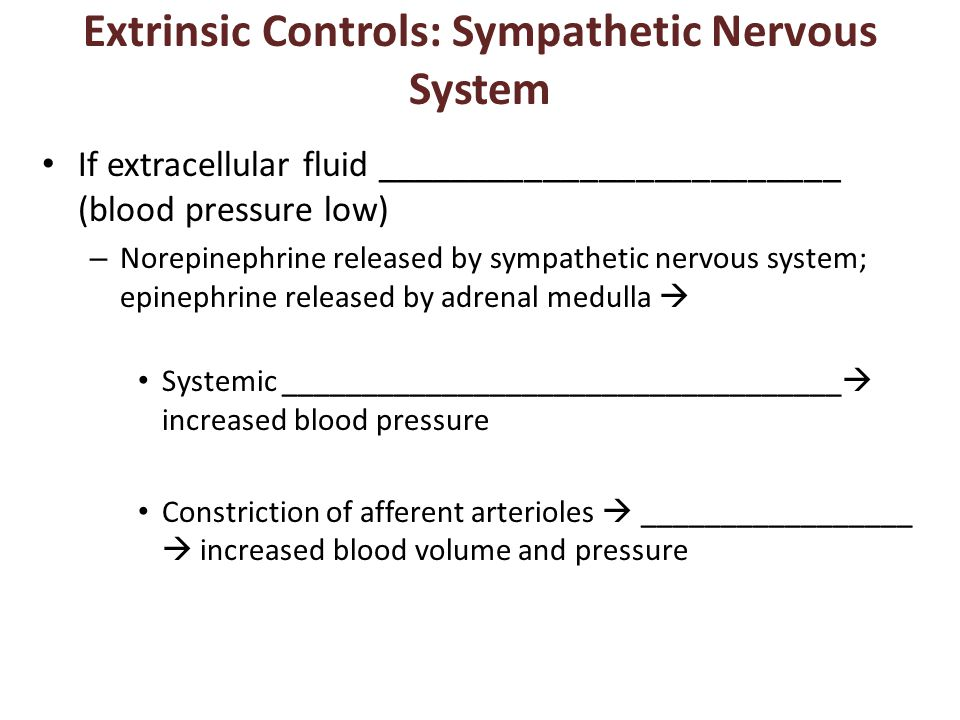 Extrinsic Controls: Sympathetic Nervous System