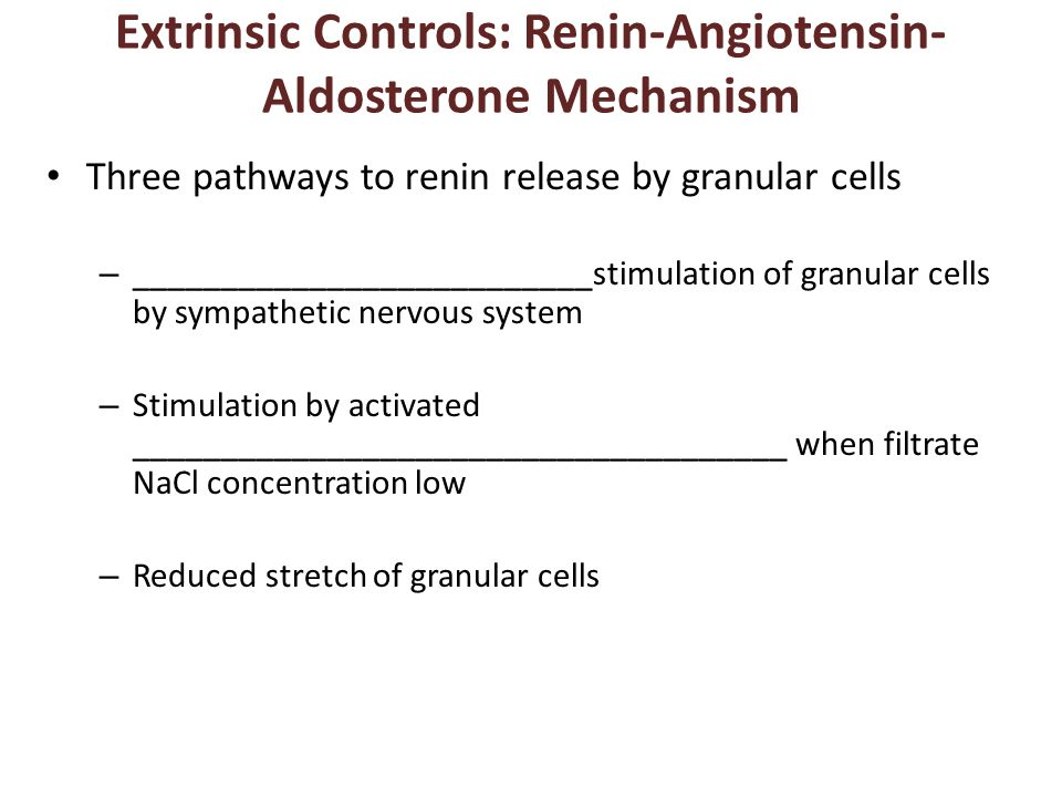 Extrinsic Controls: Renin-Angiotensin- Aldosterone Mechanism