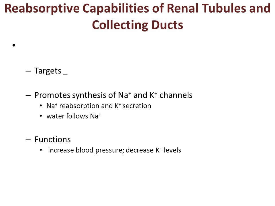 Reabsorptive Capabilities of Renal Tubules and Collecting Ducts
