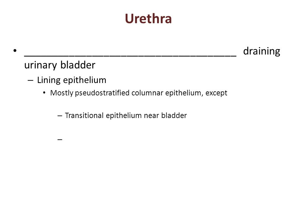 Urethra _____________________________________ draining urinary bladder