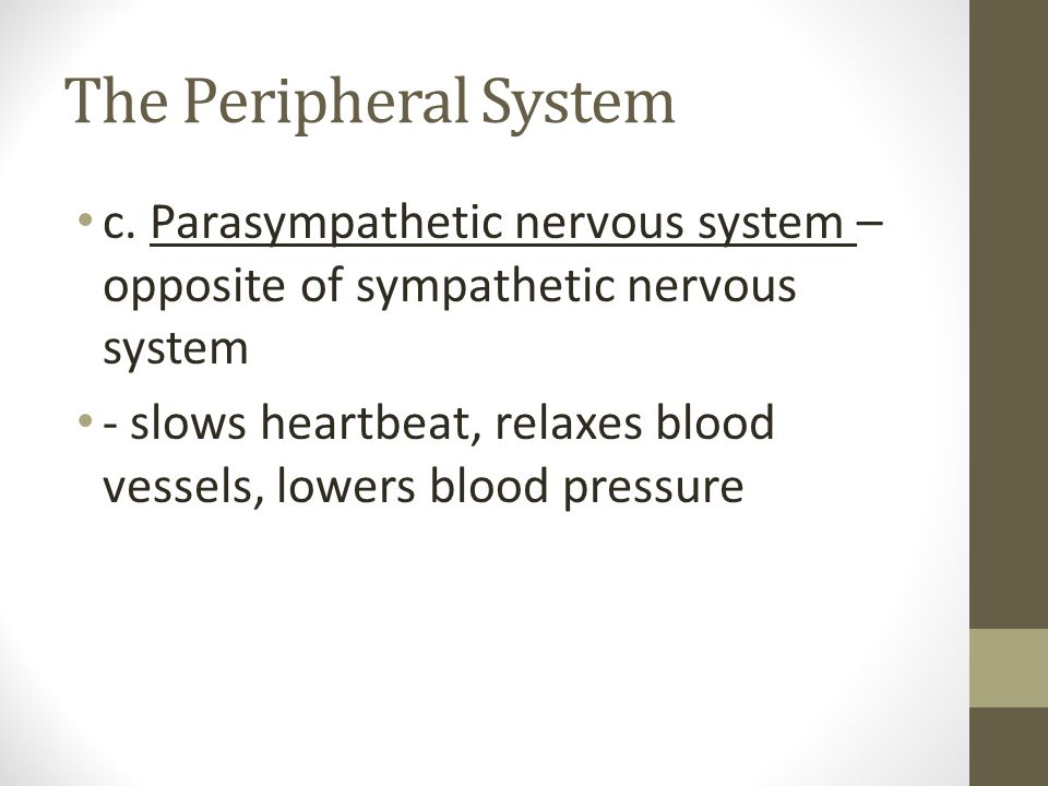 The Peripheral System c. Parasympathetic nervous system – opposite of sympathetic nervous system.