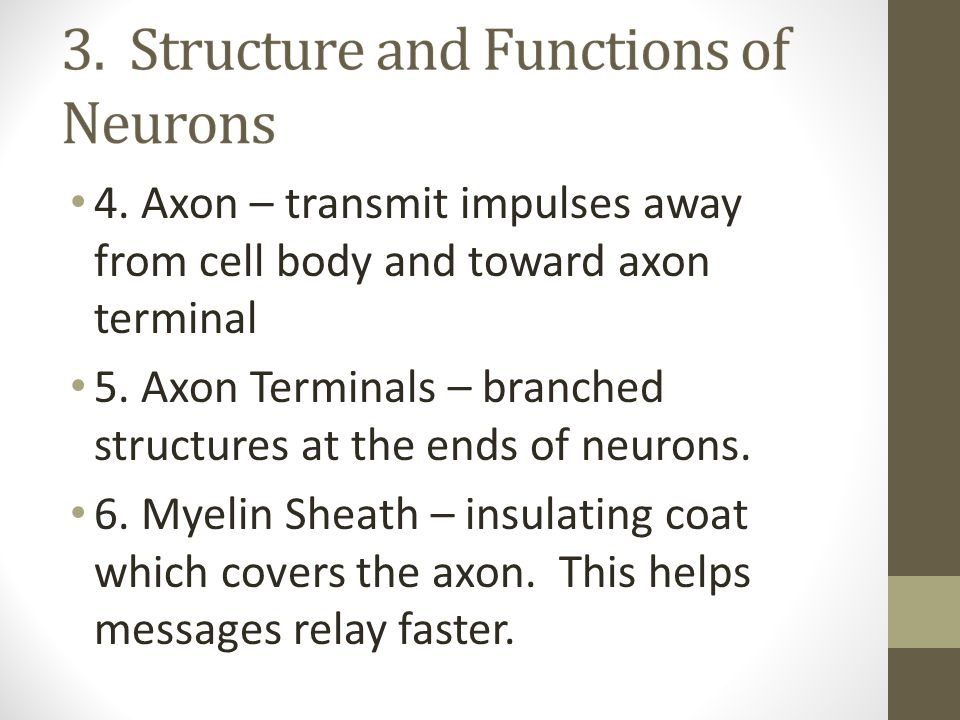 4. Axon – transmit impulses away from cell body and toward axon terminal