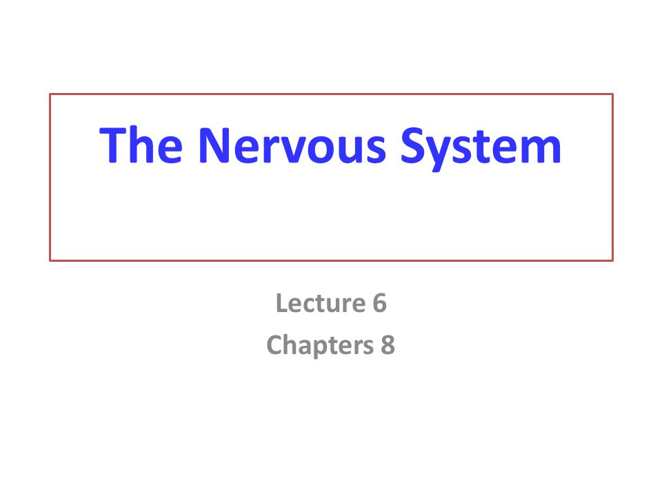 The Nervous System Lecture 6 Chapters 8