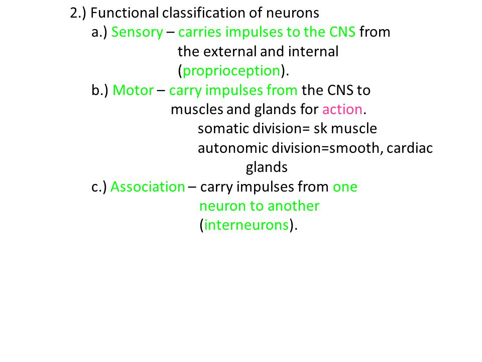 2.) Functional classification of neurons
