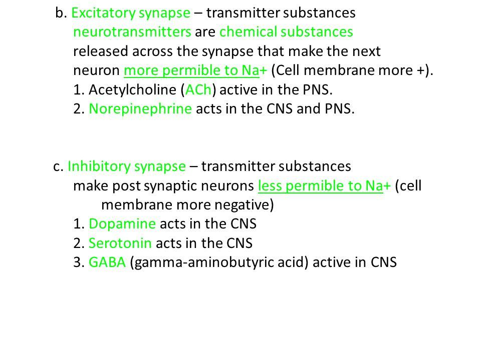 b. Excitatory synapse – transmitter substances