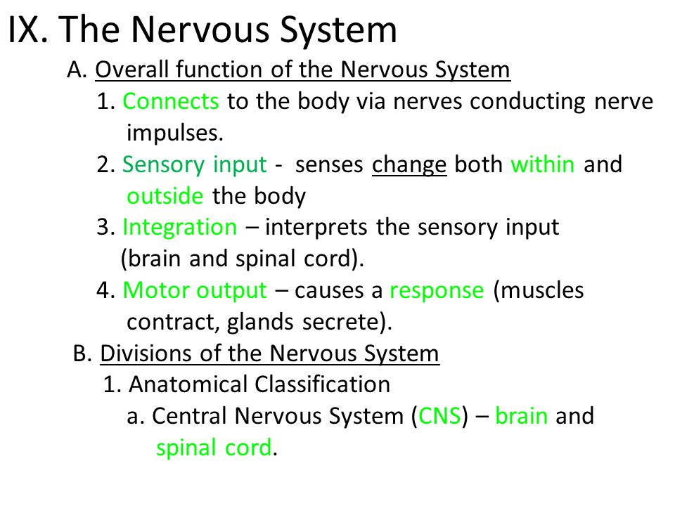 IX. The Nervous System A. Overall function of the Nervous System
