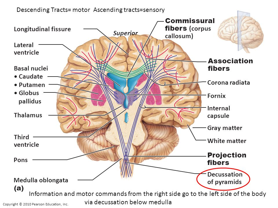 Descending Tracts= motor Ascending tracts=sensory
