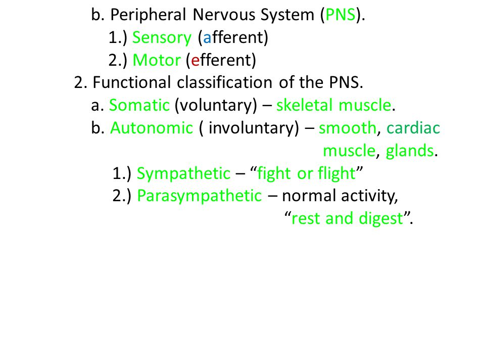 b. Peripheral Nervous System (PNS).
