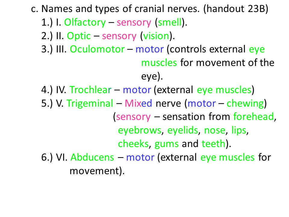 c. Names and types of cranial nerves. (handout 23B)