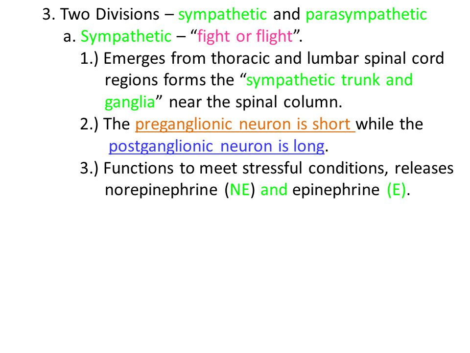 3. Two Divisions – sympathetic and parasympathetic