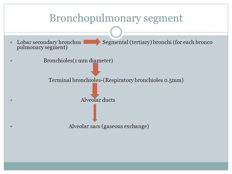 Bronchopulmonary segment