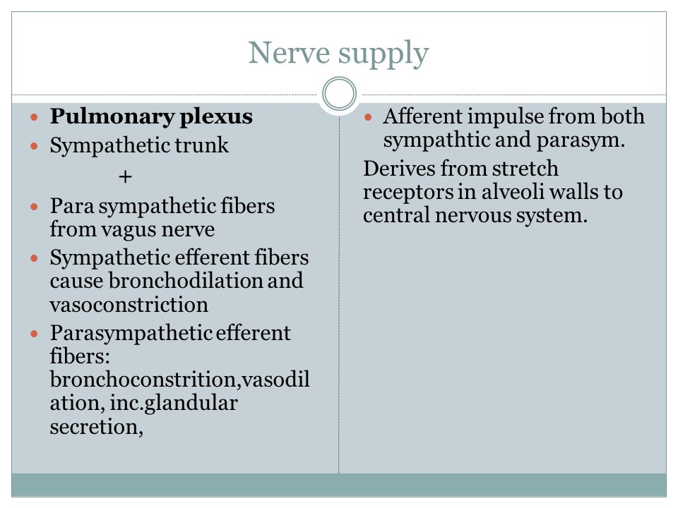 Nerve supply Pulmonary plexus Sympathetic trunk +