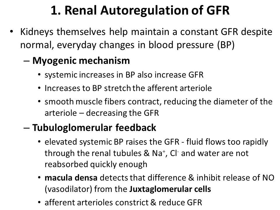 renal blood flow and gfr relationship help