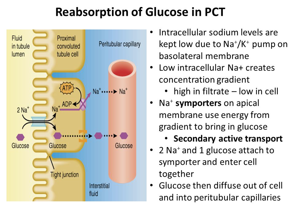Reabsorption of Glucose in PCT
