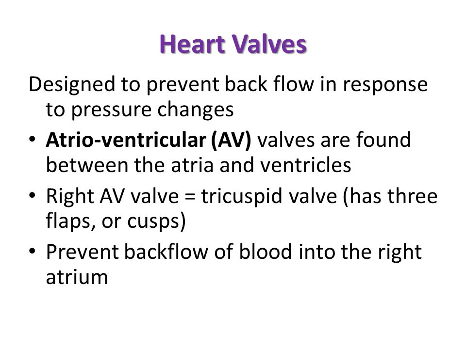 Heart Valves Designed to prevent back flow in response to pressure changes. Atrio-ventricular (AV) valves are found between the atria and ventricles.
