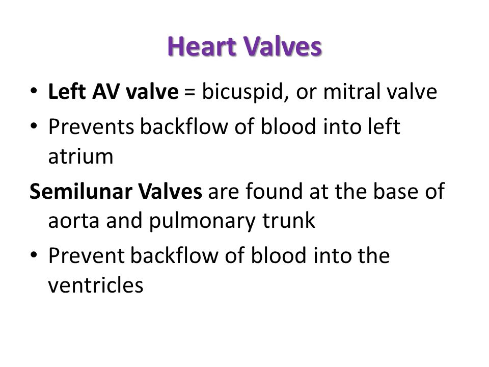 Heart Valves Left AV valve = bicuspid, or mitral valve