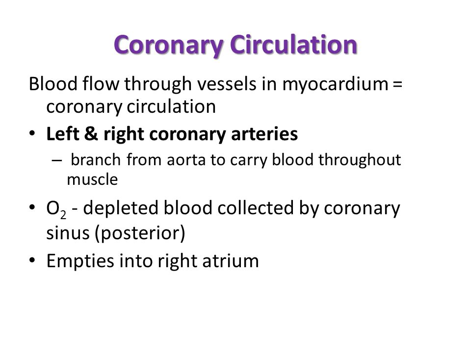 Coronary Circulation Blood flow through vessels in myocardium = coronary circulation. Left & right coronary arteries.
