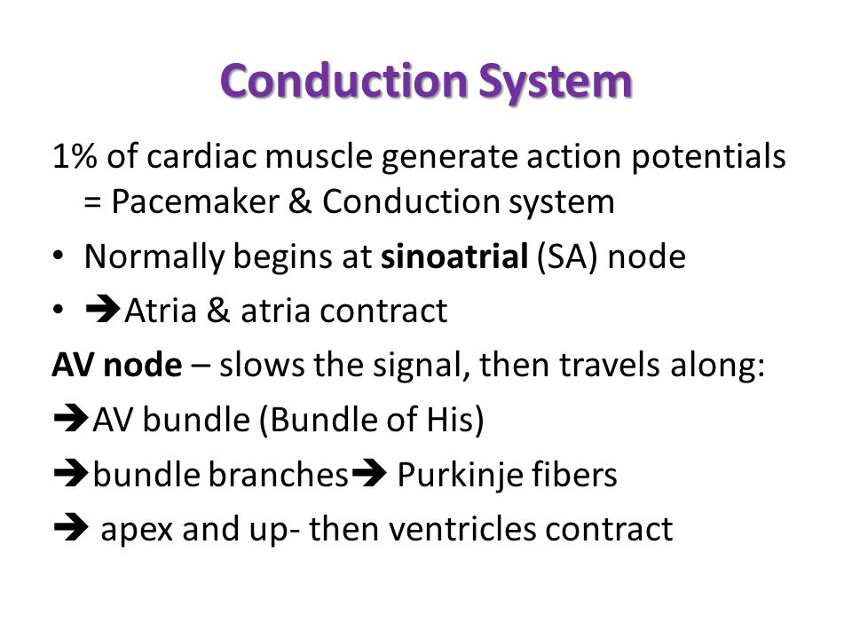 Conduction System 1% of cardiac muscle generate action potentials = Pacemaker & Conduction system. Normally begins at sinoatrial (SA) node.