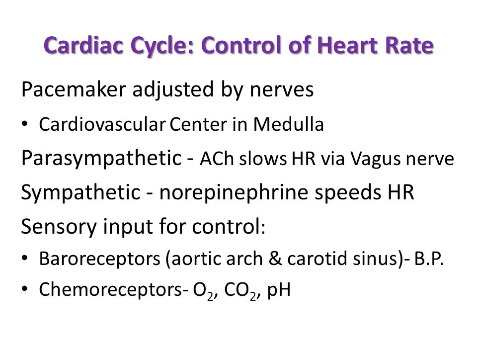 Cardiac Cycle: Control of Heart Rate