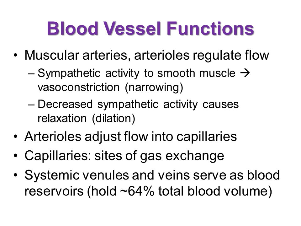 Blood Vessel Functions