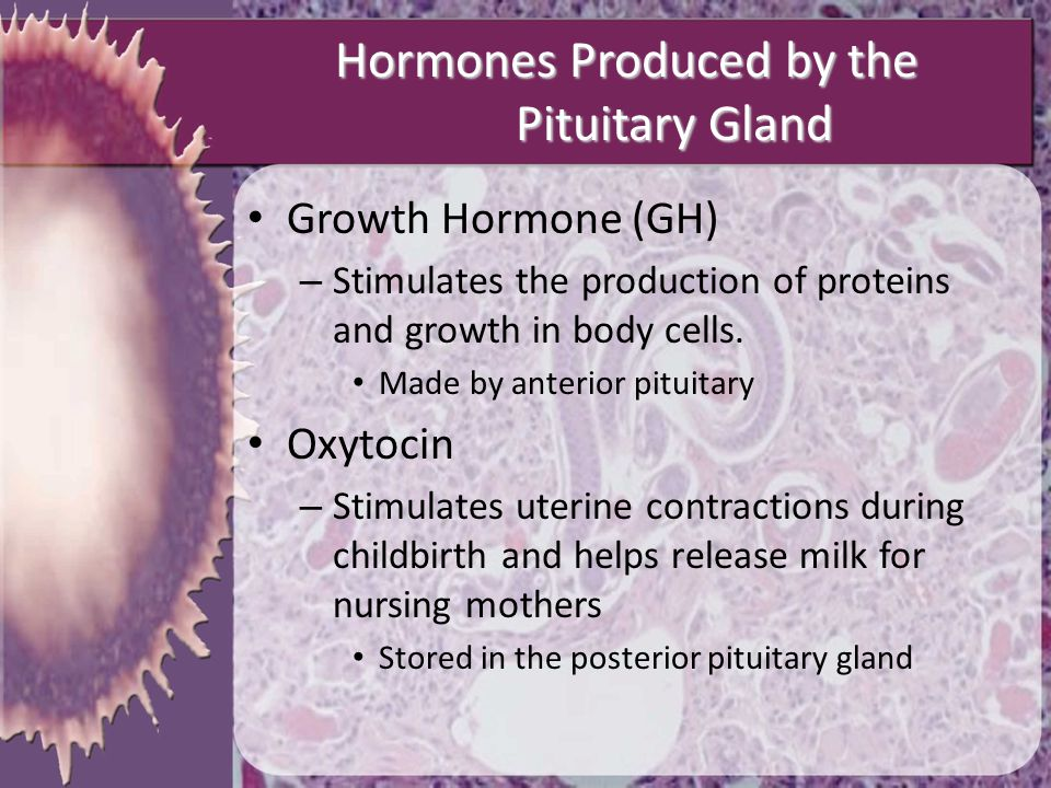 Hormones Produced by the Pituitary Gland