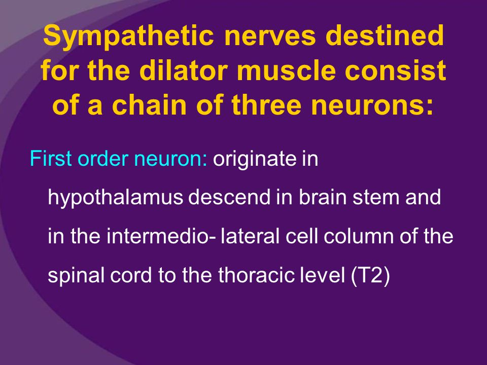 Sympathetic nerves destined for the dilator muscle consist of a chain of three neurons: