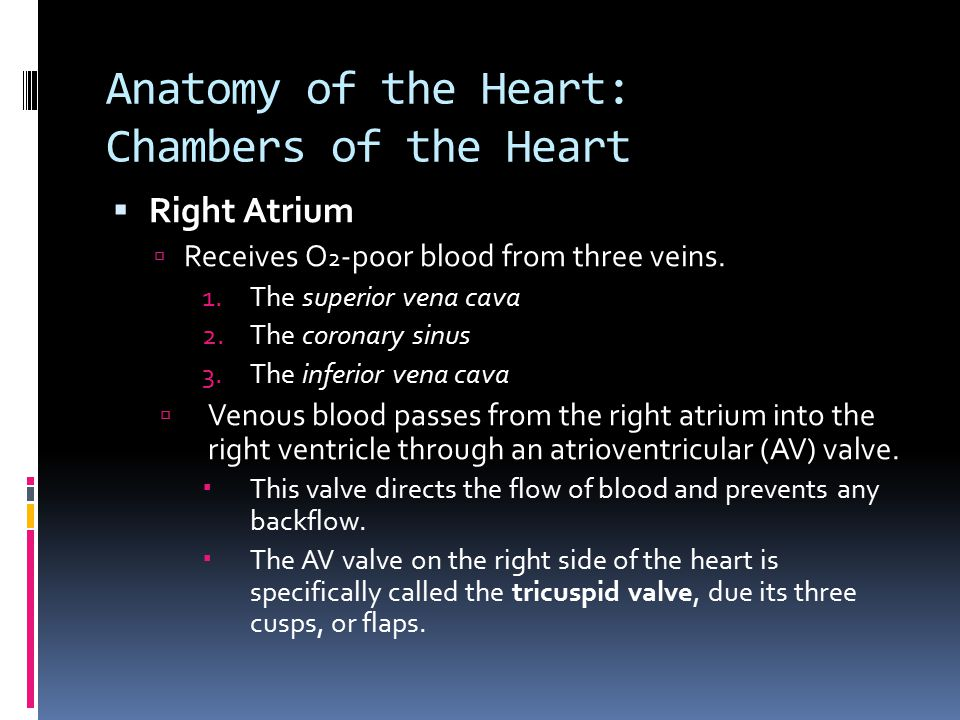 Anatomy of the Heart: Chambers of the Heart