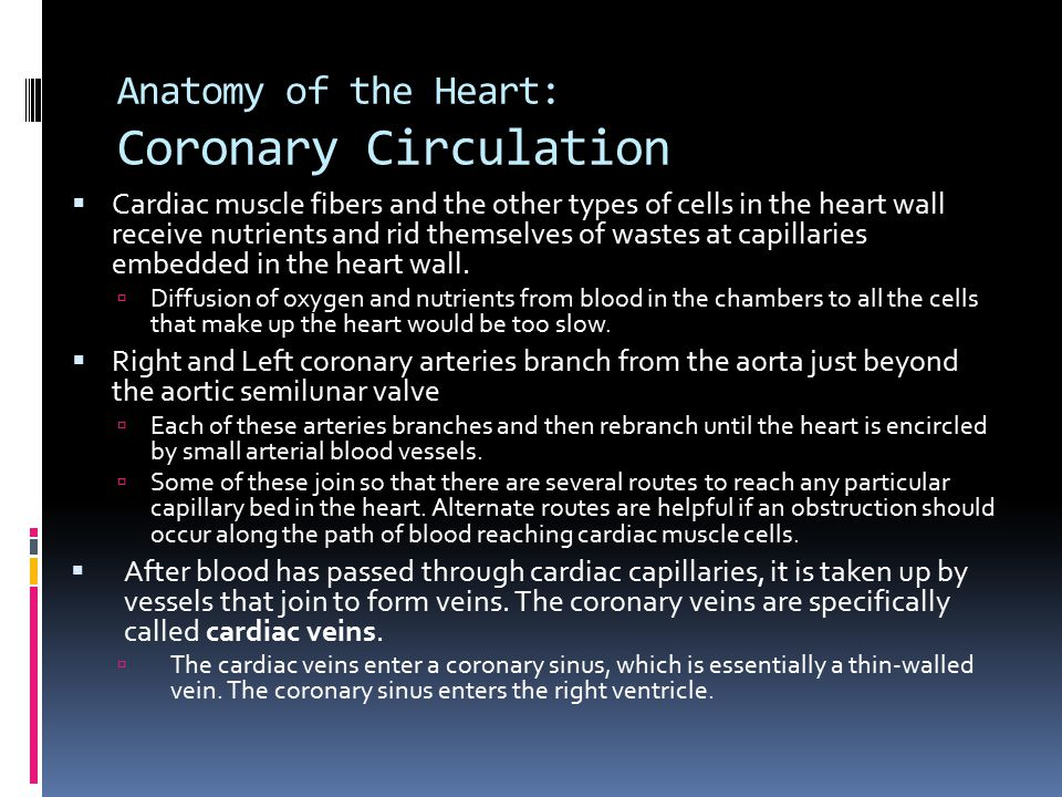 Anatomy of the Heart: Coronary Circulation
